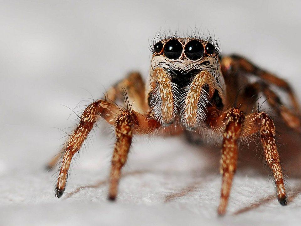 Problemlos Spinnen vertreiben